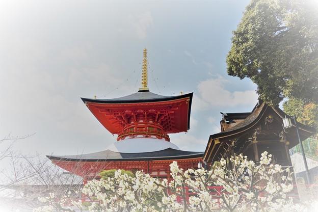 梅と大願塔