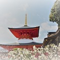 写真: 梅と大願塔