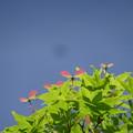 写真: 春色プロペラ