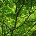 写真: 緑薫る