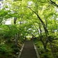 写真: 洛西青もみじ浴 緑への登竜門