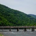 写真: 洛西青もみじ浴 渡月橋