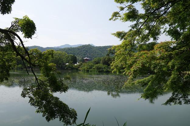 写真: 洛西青もみじ浴 大沢池