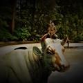写真: 踊る大黒様