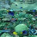 海中のパラダイス