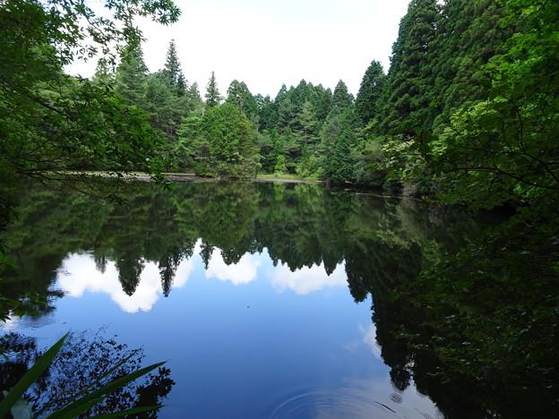 六甲山中の静かな池