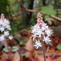 写真: ツルボに似た花