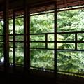 Photos: 緑庭鏡♪♪