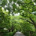Photos: 滋賀県青もみじ散策