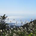 Photos: ススキと大阪湾