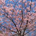 Photos: 満開の春