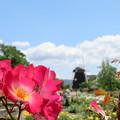 薔薇と風車