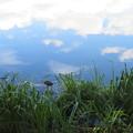 Photos: 青空とバン幼鳥