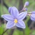 色の変わる花