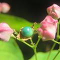 Photos: 宝石見っけ!