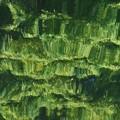 Photos: 緑奏でる
