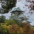 Photos: 大阪城北堀