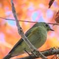 Photos: ルリ子の落羽松の紅葉狩り