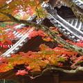 Photos: 山門紅葉