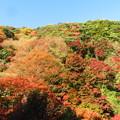 Photos: 箕面山