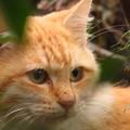 林に潜む猫