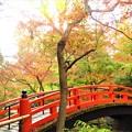 Photos: 北野天満宮  鶯橋
