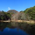 カワセミの棲む池