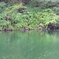 Photos: 緑凍える