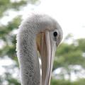 Photos: 鳥1