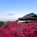 Photos: 清水寺の紅葉