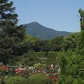 写真: 比叡山借景のバラ園