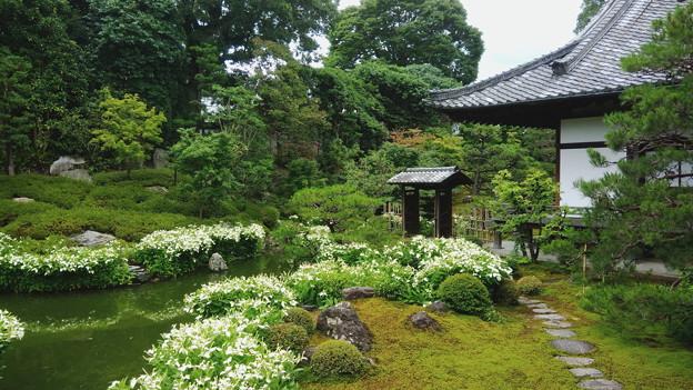 半夏生の庭