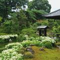 写真: 半夏生の庭