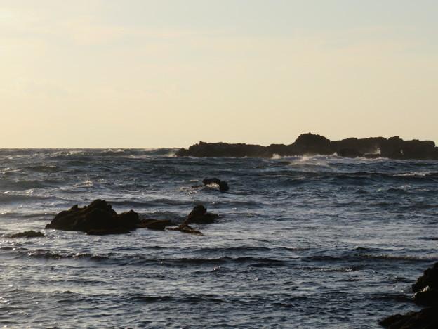 写真: 城ヶ島 海その790 IMG_1277