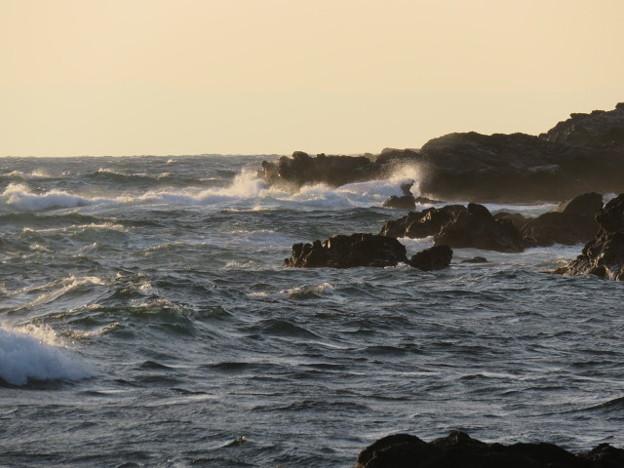 Photos: 城ヶ島 海その818 IMG_1319