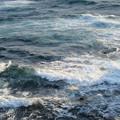 Photos: 城ヶ島 海その830 IMG_1263