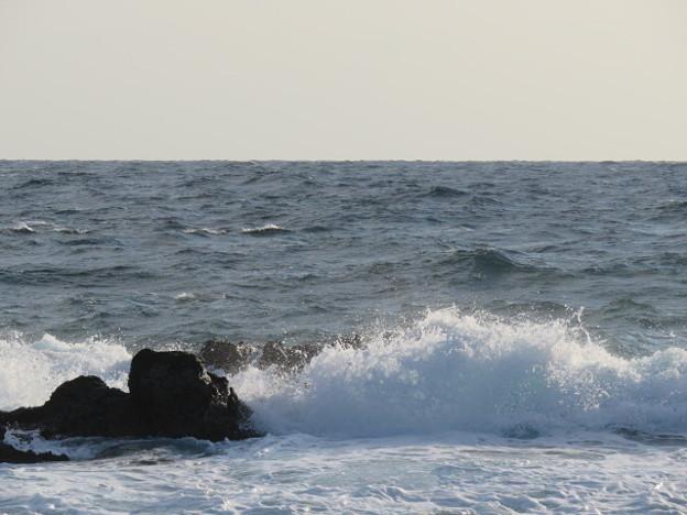 城ヶ島 海その833 IMG_1157