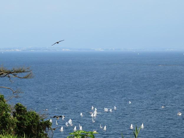 江の島 海その880 IMG_3436