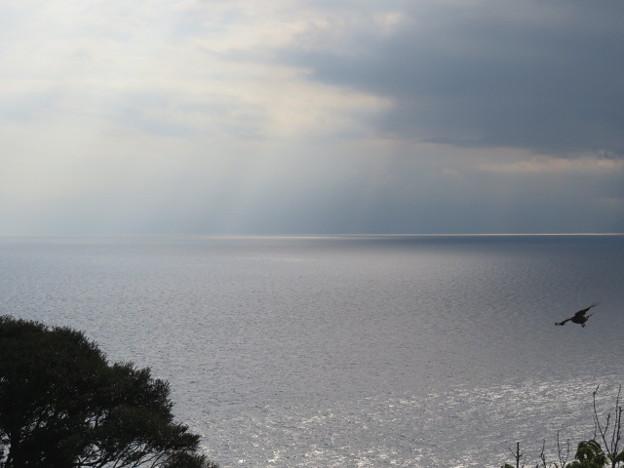 江の島 海その904 IMG_3443