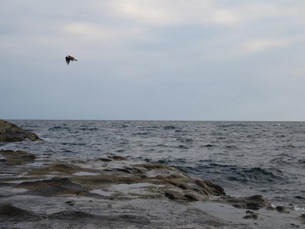 Photos: 江の島 海その908 IMG_3561