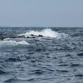 Photos: 江の島 海その955 IMG_3491