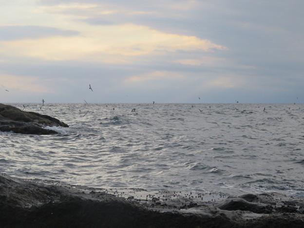 Photos: 江の島 海その986 IMG_3581