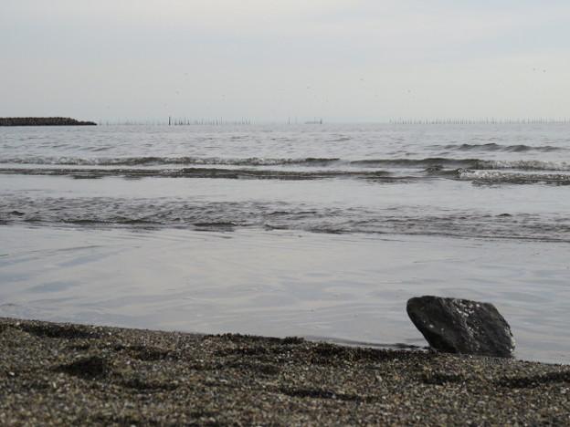 Photos: 葛西臨海公園 海その996 IMG_4057