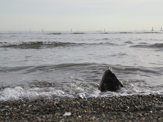 Photos: 葛西臨海公園 海その1002 IMG_4120
