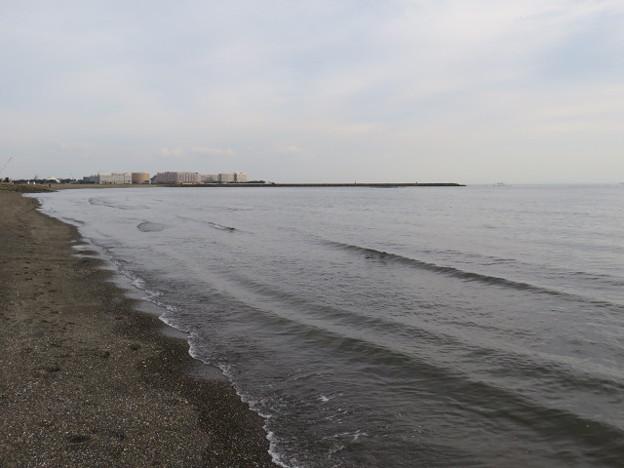 Photos: 葛西臨海公園 海その1017 IMG_4139