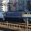 Photos: EF65電気機関車 RIMG6758