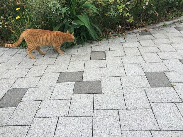 駿河湾沼津SAの猫さん1