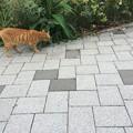 Photos: 駿河湾沼津SAの猫さん1