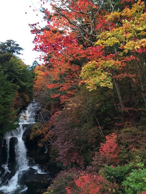 竜頭の滝8