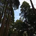 宮崎神宮の森